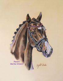 Connemara, Pferde, Reiten, Sport