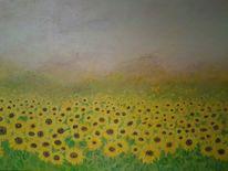 Himmel, Abend, Sonne, Blumen