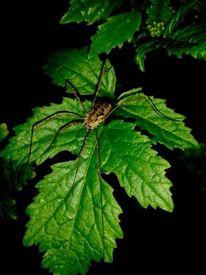 Spinne, Natur, Blätter, Fotografie