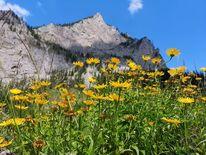 Berge, Blumen, Natur, Fotografie