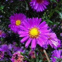 Natur, Regen, Blumen, Fotografie