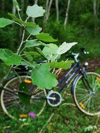 Natur, Blätter, Fahrrad, Fotografie