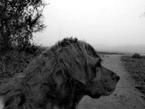 Nebel, Hund, Natur, Fotografie