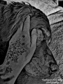 Liebe, Tattoo, Hund, Tiere