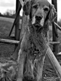 Natur, Hund, Tiere, Fotografie