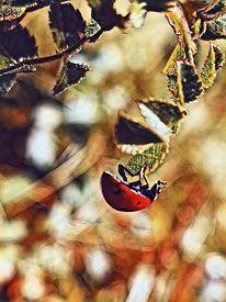 Natur, Marienkäfer, Insekten, Fotografie
