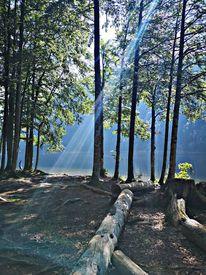 Wasser, Natur, Baum, Fotografie