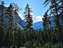 Wald, Berge, Natur, Landschaft