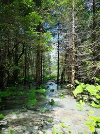 Natur, Wald, Fotografie