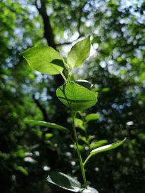 Pflanzen, Natur, Wald, Fotografie