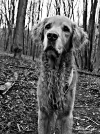 Tiere, Natur, Hund, Fotografie