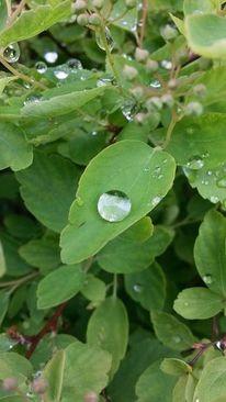 Tropfen, Grün, Natur, Regen