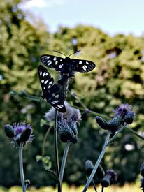 Tiere, Schmetterling, Natur, Fotografie