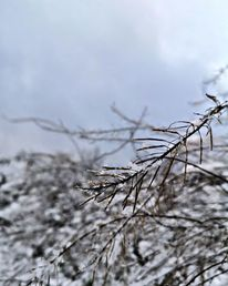 Natur, Winter, Fotografie
