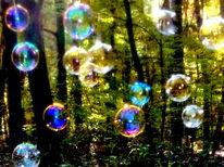 Wald, Bildbearbeitung, Fotografie, Regenbgenfarben