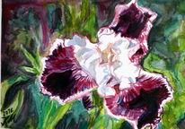 Blüte, Iris, Lila, Natur