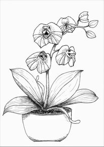 Agame, Orchidee, Kragenechse, Echse