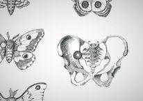 Schmetterling, Becken, Nachtfalter, Beckenknochen