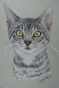 Haustier, Buntstiftzeichnung, Katze, Tiere