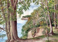 Natur, Baum, Rügen, Aquarell