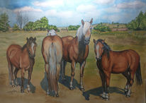 Himmel, Pferde, Weide, Landschaft