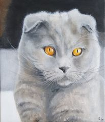 Katze, Britischkurzhaar, Grau, Malerei