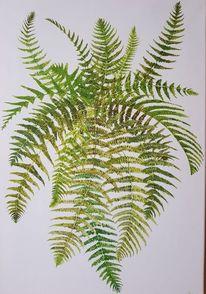 Blätter, Farne, Natur, Pflanzen