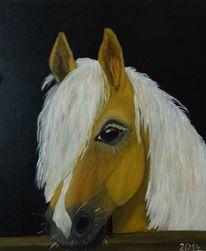 Stall, Pferde, Haflinger, Malerei