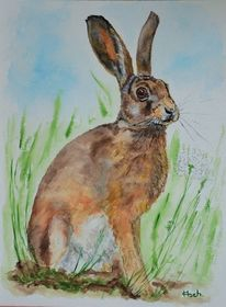 Hase, Gras, Aquarell, Tiere