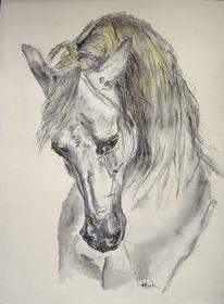 Pose, Pferde, Araber, Pferdekopf