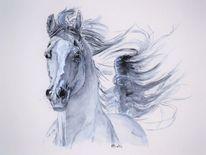 Schweif, Araber, Pferde, Galopp
