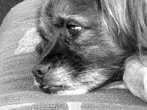 Hund, Tiere, Fotografie, Augen