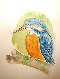 Tiere, Eisvogel, Aquarellmalerei, Aquarell