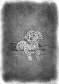 Tiere, Hund, Zeichnung, Zeichnungen