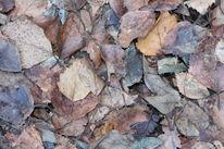 Schatten, Vergehen, Kalt, Herbst