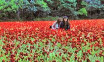 Blumen, Farben, Malerei, Blüte