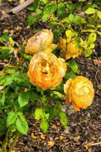 Fotografie, Gemälde, Blumen, Blüte