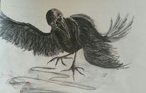 Vogel, Augen, Rabe, Krähe