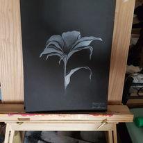 Blumen, Weiß, Schwarz weiß, Lilie