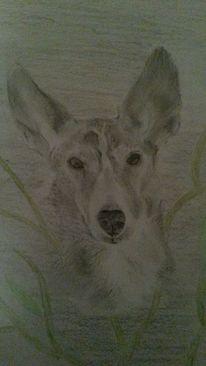 Ohr, Portrait, Hund, Zeichnung