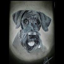 Zeichnung, Realismus, Tierportrait, Hund