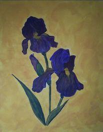 Iris, Blumen, Pflanzen, Schwertlilie