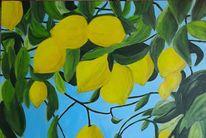 Zitrone, Zitrusfrüchte, Natur, Gelb