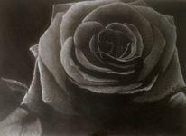 Schwarz, Blüte, Dunkel, Zeichnung