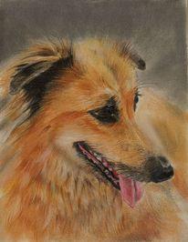 Tiere, Mischling, Hund, Malerei