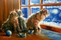 Licht, Katze, Kitti, Winter