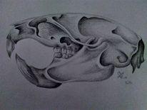 Anatomie, Schädel, Ratte, Schwarz