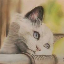 Katze, Pastellmalerei, Portrait, Tierportrait