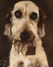 Pastellmalerei, Portrait, Tierportrait, Hund