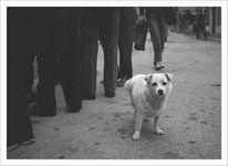 Hund, Menschen, Kälte, Kalt
